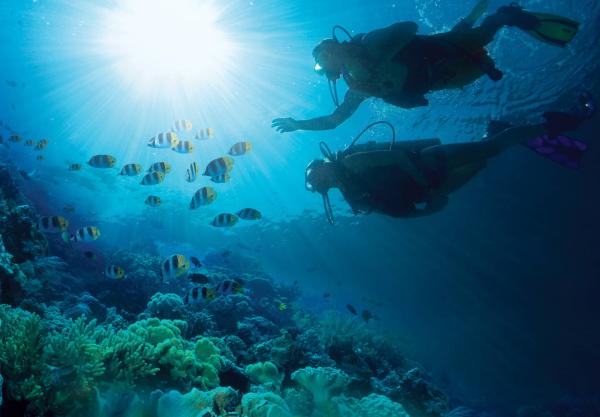 scuba dive great exuma bahamas included resized 600